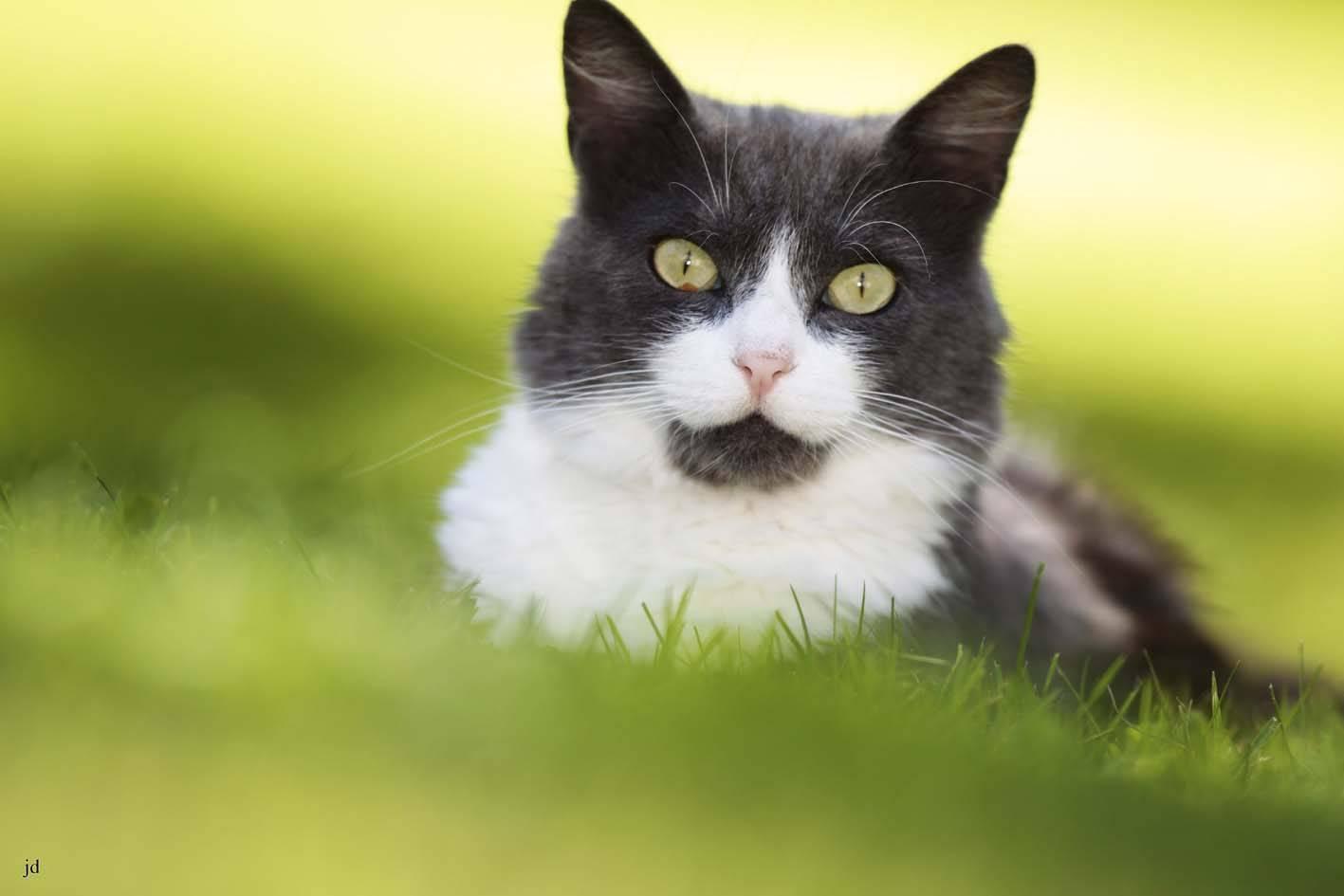 Moustache-2-kl
